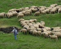 Υπέρ Κουρή, κατά Γαλιατσάτου, Ματζουράτου οι βιοπαραγωγοί και κτηνοτρόφοι