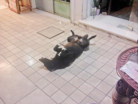 Ο σκύλος-άγαλμα στο Λιθόστρωτο