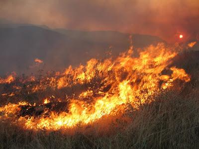 Φωτιές σε Μαρκόπουλο και Αγία Ειρήνη