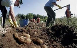 Παρατείνεται η προθεσμία για την υποβολή των δικαιολογητικών επιστροφής του Φ.Π.Α. στους αγρότες