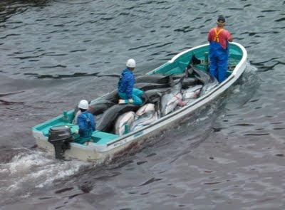 Η σφαγή των δελφινιών